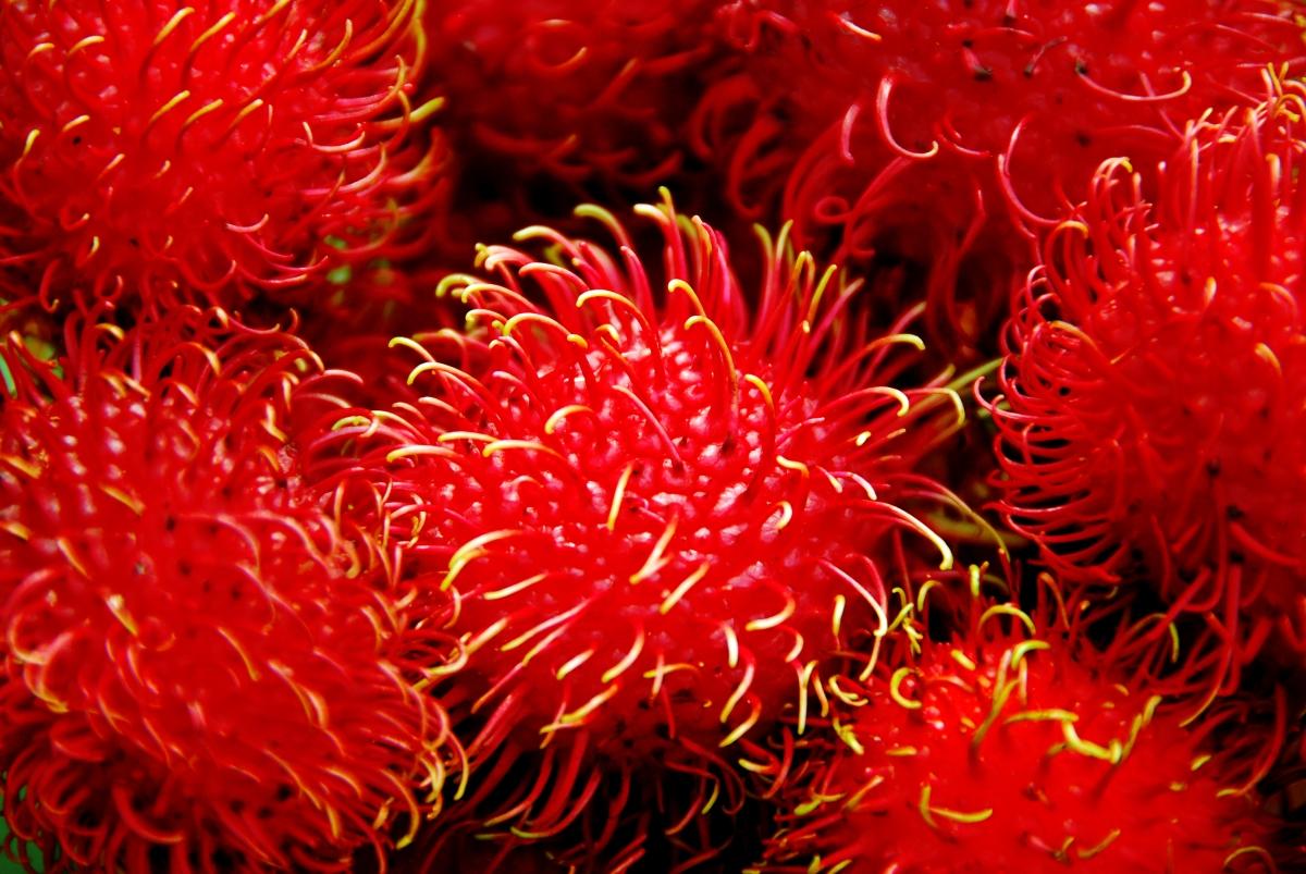 Tropikalne owoce, które wyglądają jak prawdziwe dzieła sztuki