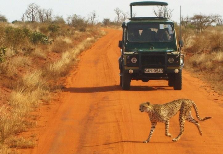 Safari_Gepard_Tsavo_Kenia_02